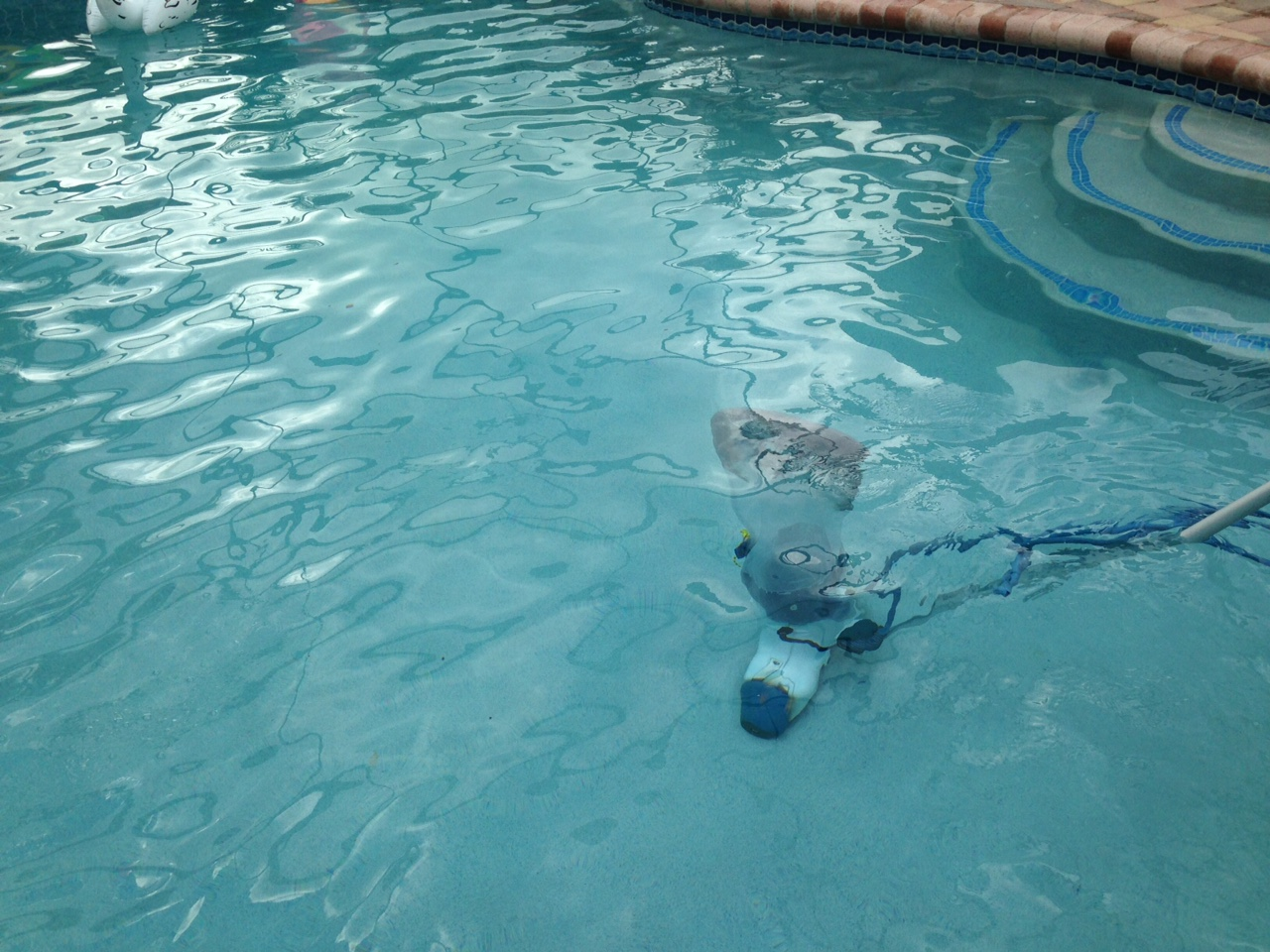CLEAR POOL IN PEMBROKEPINES